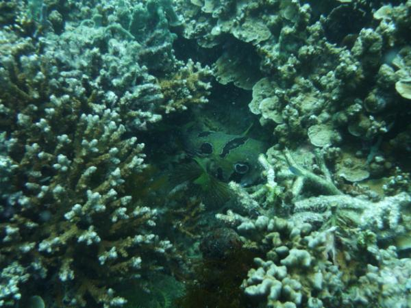 Malaisie - Ile de Tioman : Big Brother is watching you !