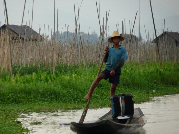 Birmanie - Lac Inle : Inthas ramant à la verticale