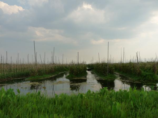 Birmanie - Lac Inle : Jardins flottants inthas