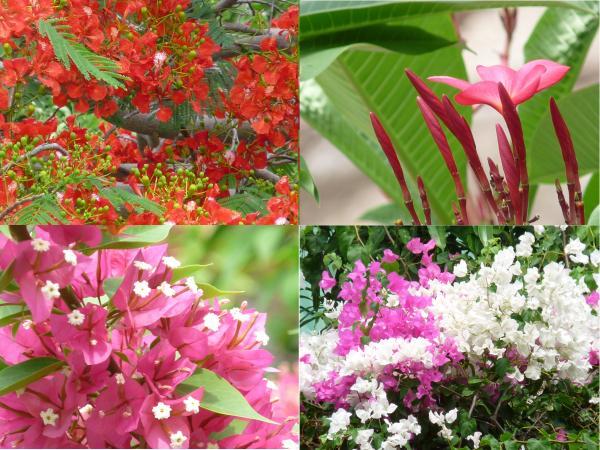 Thaïlande - Koh Tao : C'est beau !